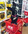 Store Mascot Darcy